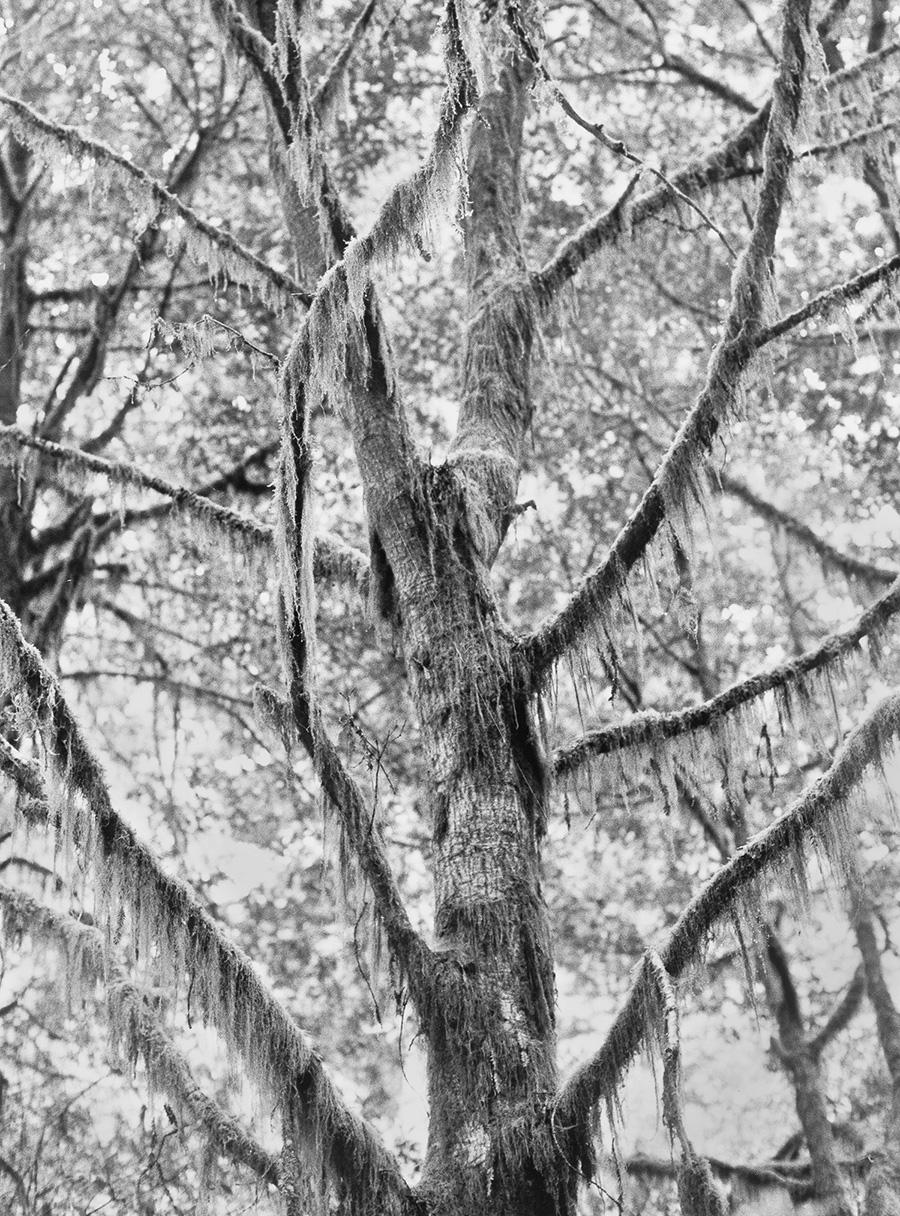 011 Rogier Houwen, Dead Tree